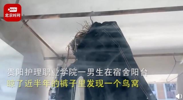 高校男生裤子晾宿舍半年长出鸟窝 上海浦东新区上南花城社区出现奇怪现象