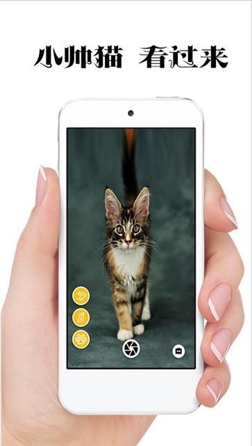 极简猫咪相机软件截图2