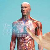 虚拟现实人体解剖
