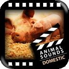 认识动物声音