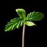 手机植物种植
