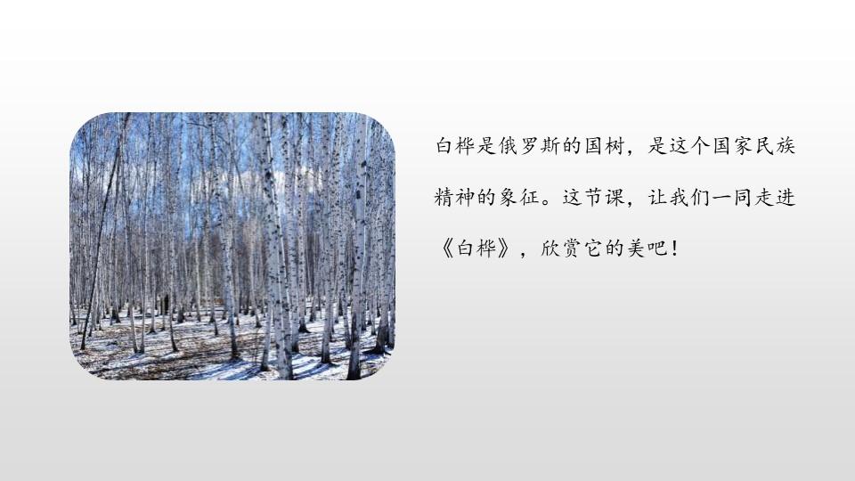 《白桦》PPT(第1课时)下载