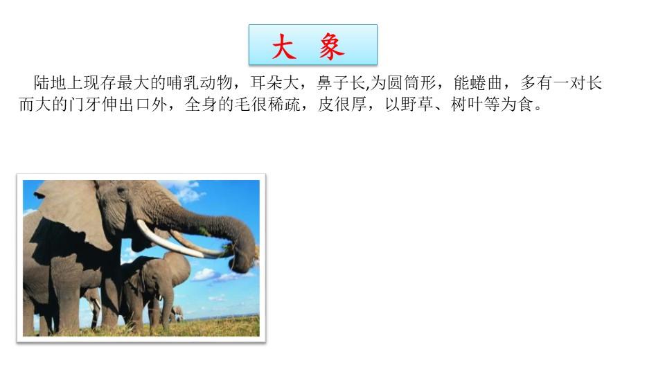 《大象的耳朵》PPT课件下载