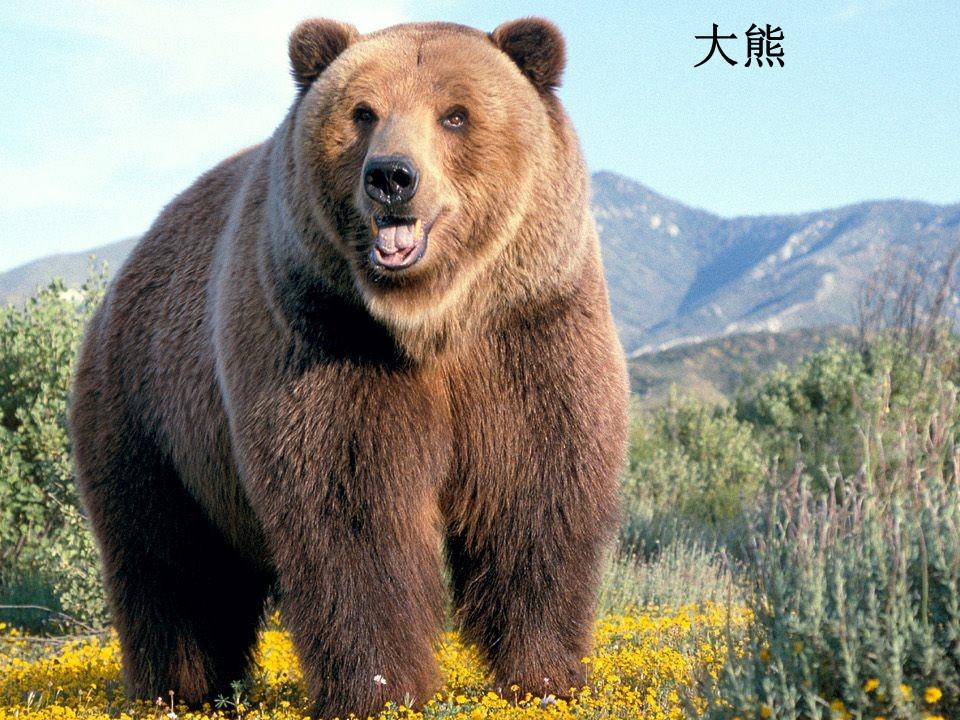《小熊和小鹿》PPT课件4下载