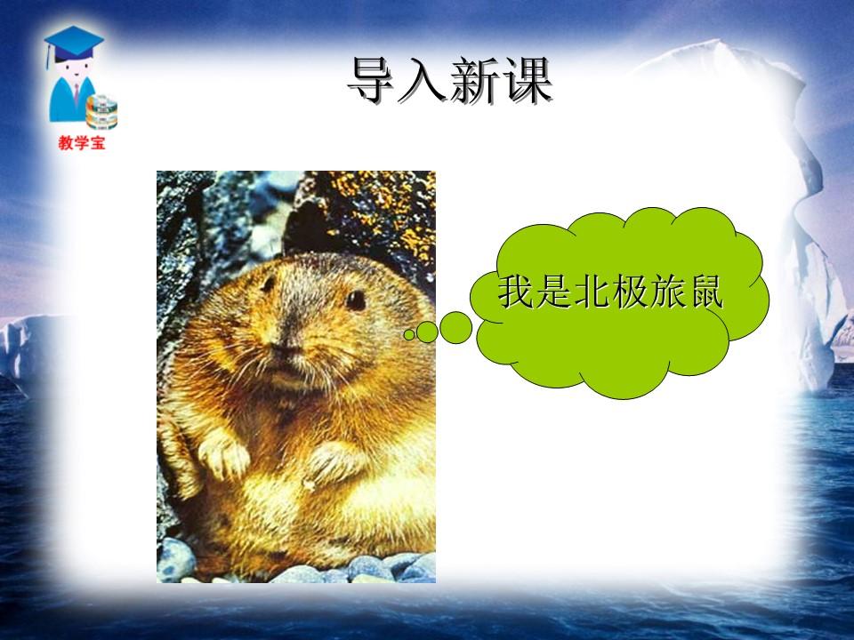 《旅鼠之谜》PPT课件7下载