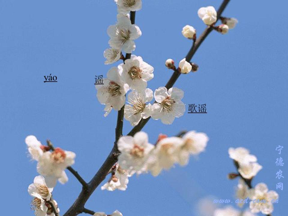 《春光染绿我们双脚》PPT课件4下载