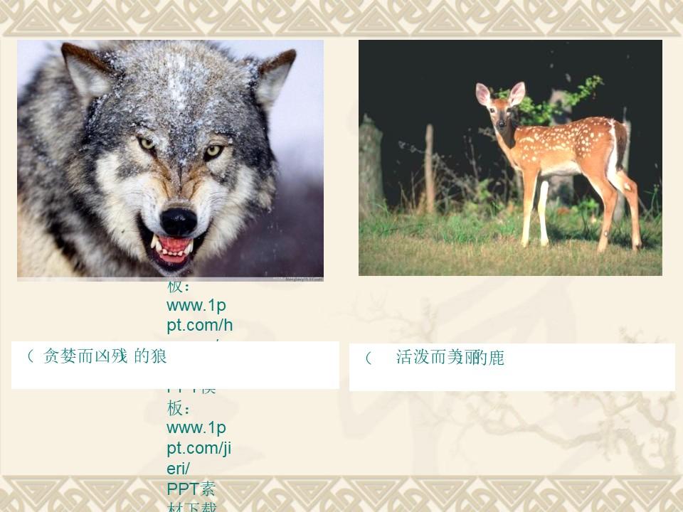 《狼和鹿》PPT课件5下载