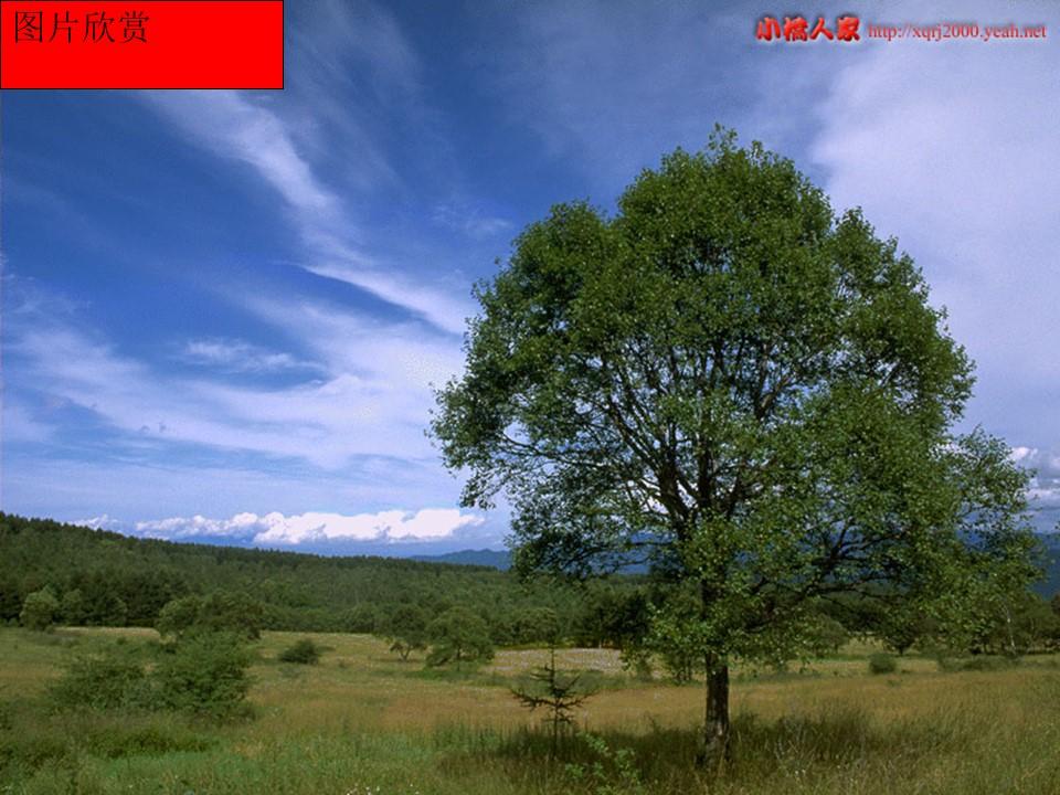 《我骄傲,我是一棵树》PPT课件2下载