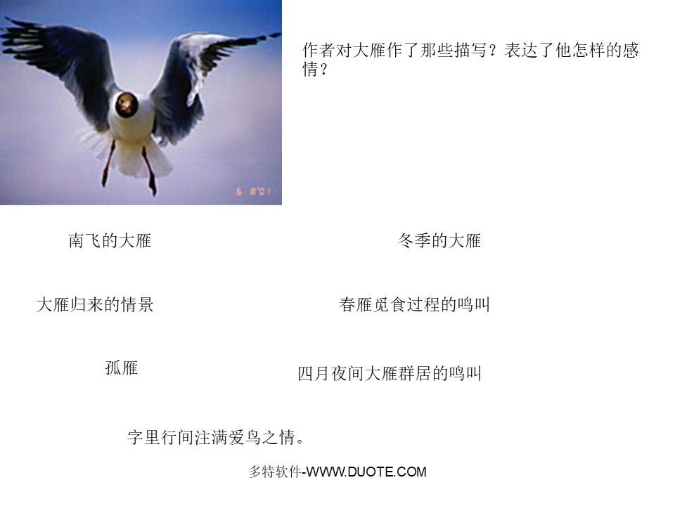 《大雁归来》PPT课件2下载