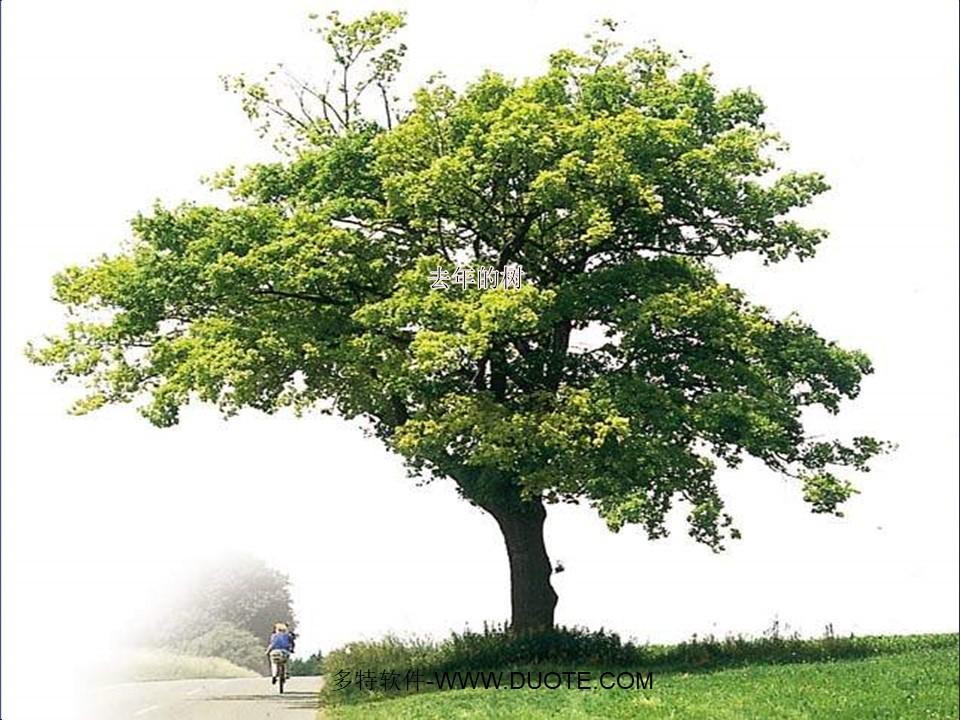 《去年的树》PPT教学课件下载6下载