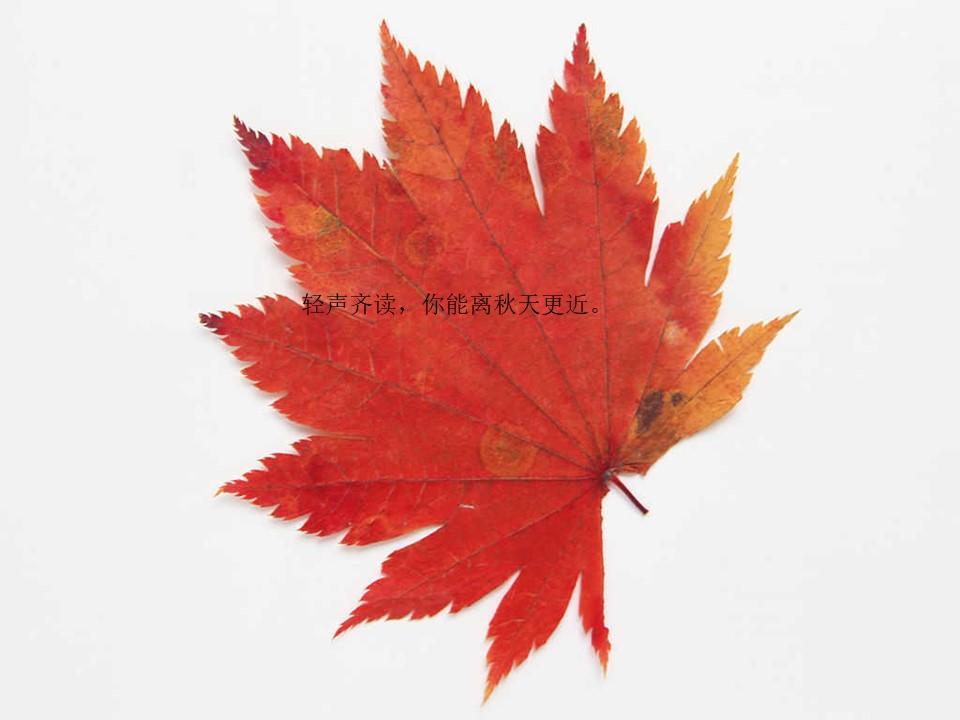 《听听,秋的声音》PPT教学课件下载3下载
