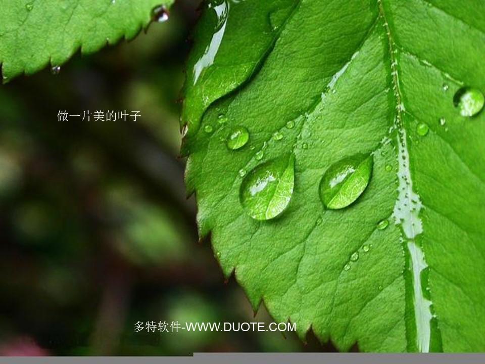 《做一片美的叶子》PPT课件2下载