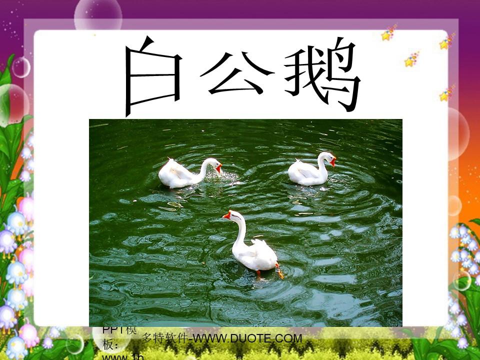 《白公鹅》PPT课件下载3下载
