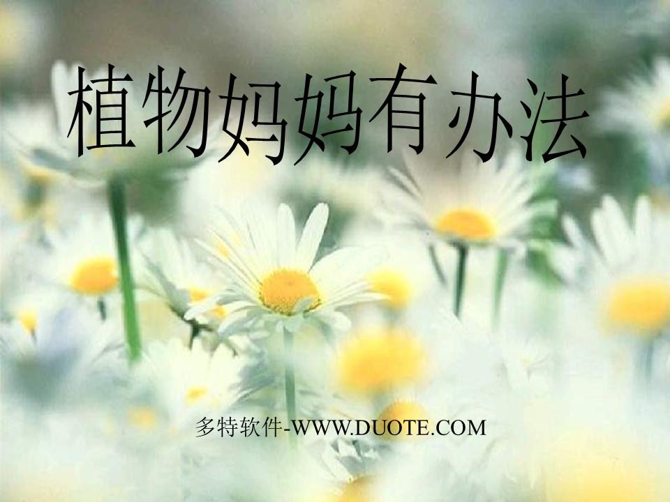 《植物妈妈有办法》PPT教学课件下载下载