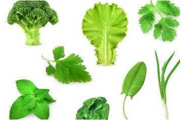 菜叶子属于什么垃圾?菜叶子垃圾归属分类介绍