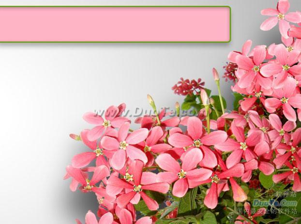 鲜花背景PPT模板下载