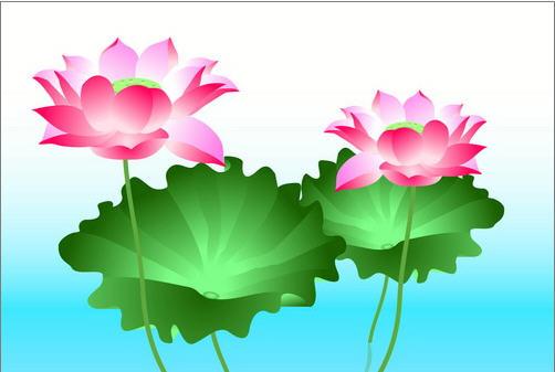 Illustrator CS3绘制矢量荷花插画