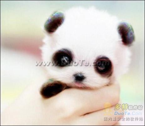 美图秀秀小创意 萌宠变身功夫熊猫