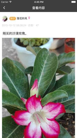 枫桥居多肉植物花卉